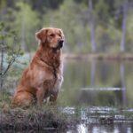 Sex hundar är nu utsedda att bli frimärksmotiv